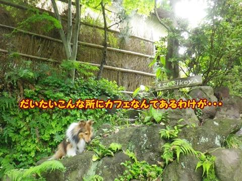 20120610_1_8.jpg
