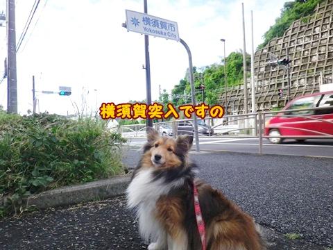20120610_2.jpg