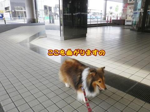 20120610_5.jpg