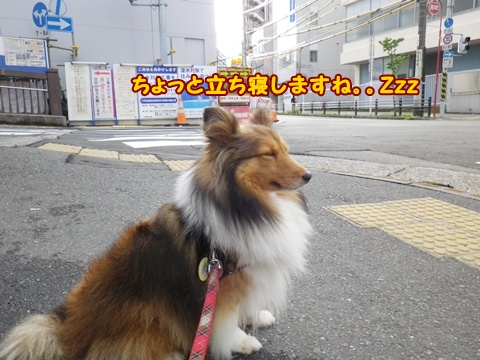 20120610_7.jpg