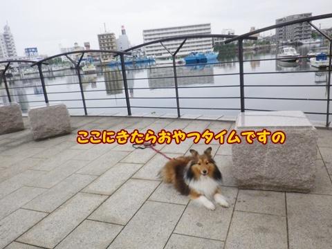 20120616_3.jpg