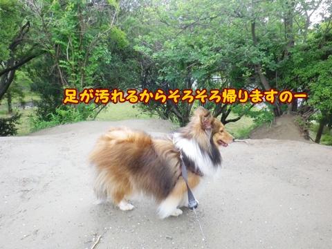 20120617_12.jpg