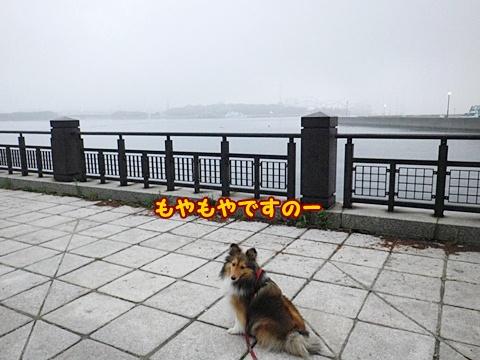 20120623_4.jpg