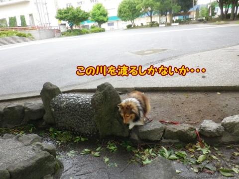 20120624_1_1.jpg