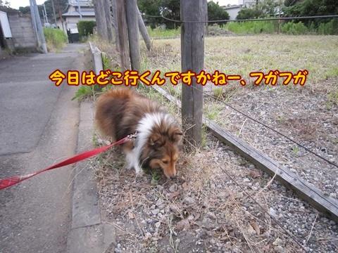 20120701_2.jpg
