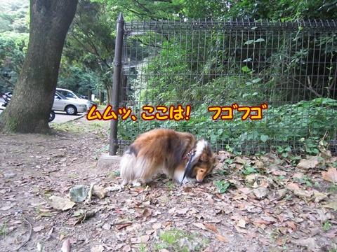 20120701_3.jpg