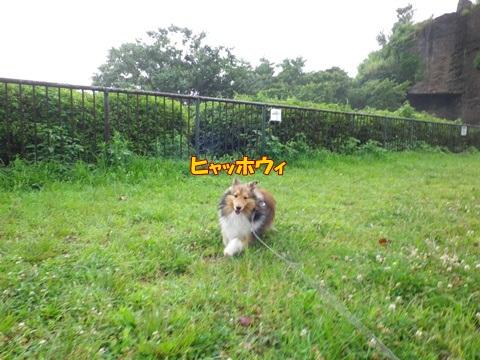20120707_1_5.jpg