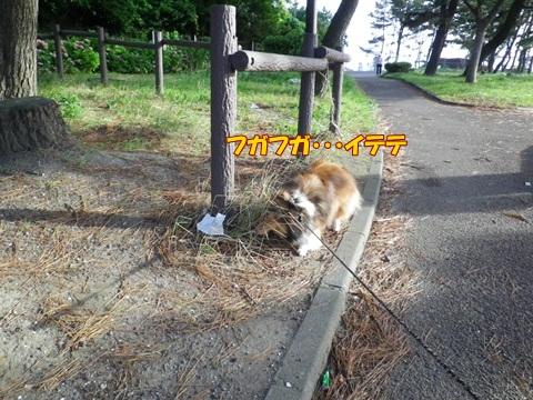20120716_11.jpg