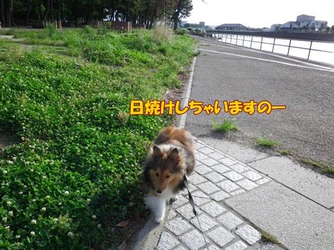 20120716_1_1.jpg