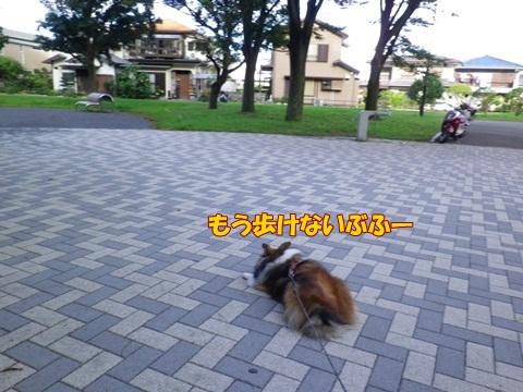20120716_1_12.jpg