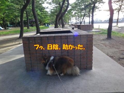20120716_1_2.jpg