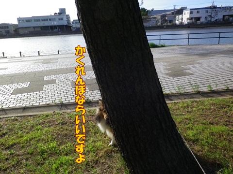 20120716_1_6.jpg