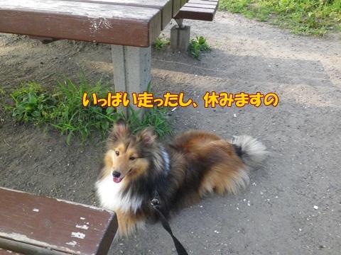 20120728_1_1.jpg