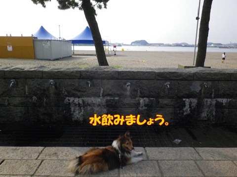 20120728_1_11.jpg