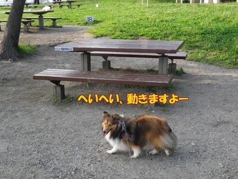 20120728_1_2.jpg