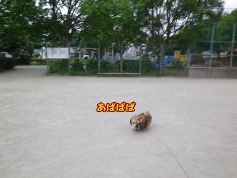 20120804_1_7.jpg