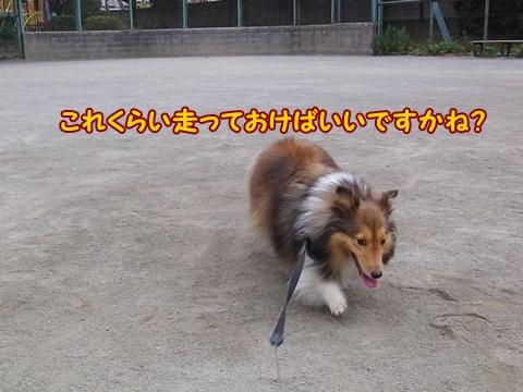 20120804_1_9.jpg