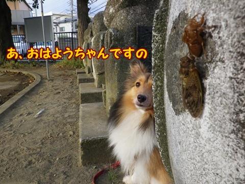 20120804_2.jpg
