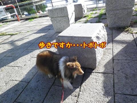 20120805_10.jpg