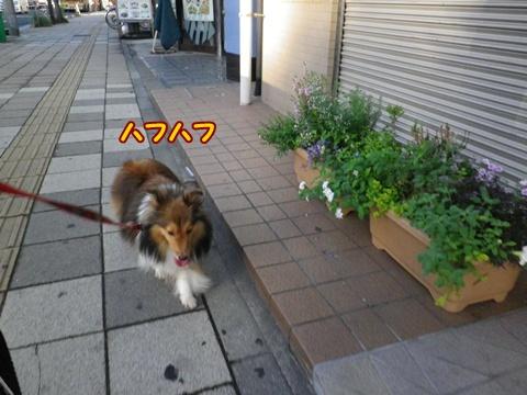 20120805_4.jpg