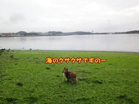 20120812_1.jpg