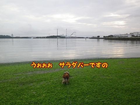 20120812_2.jpg