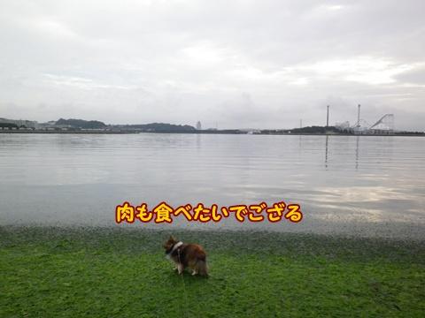 20120812_3.jpg