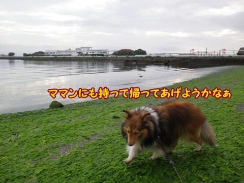 20120812_6.jpg