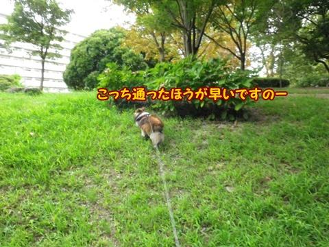 20120818_11.jpg