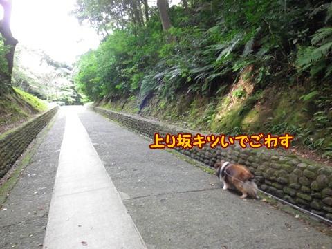 20120818_2.jpg