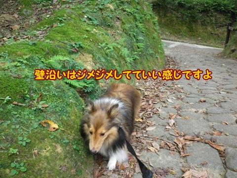 20120818_5.jpg