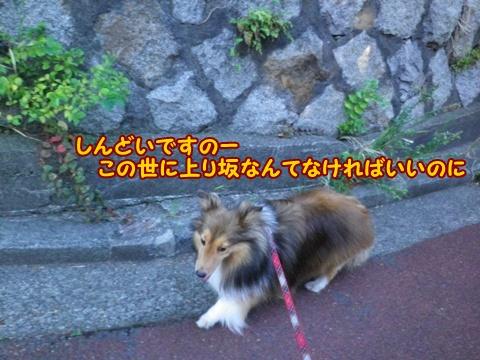 20120819_3_2.jpg