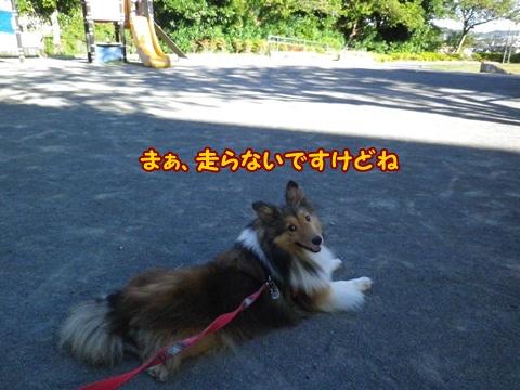 20120819_7.jpg