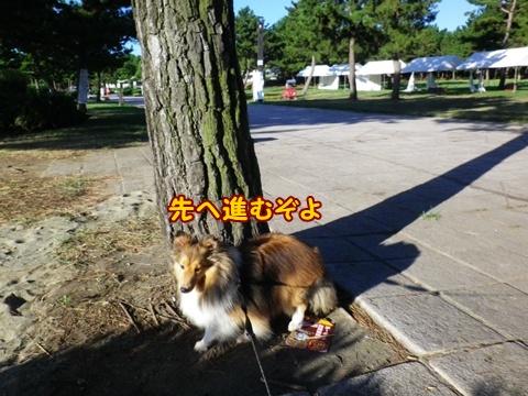 20120826_1_1.jpg