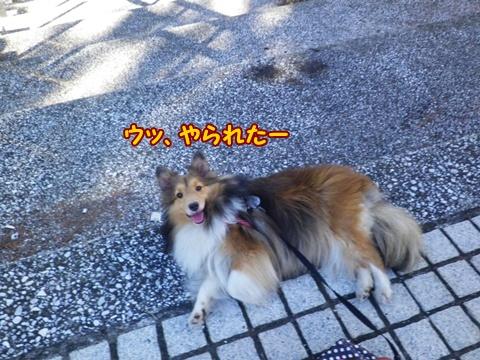 20120826_1_11.jpg