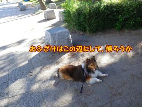 20120826_1_12.jpg