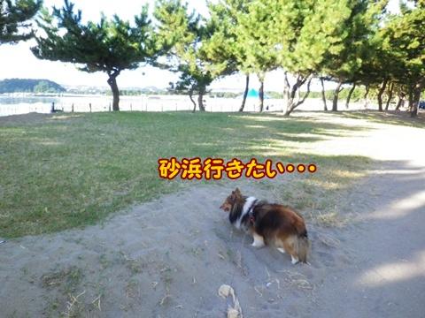 20120826_1_5.jpg