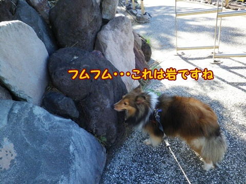 20120826_1_9.jpg