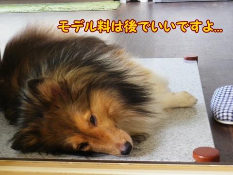 20120907_10.jpg
