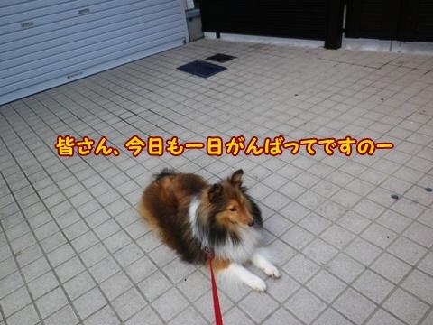 20120907_2.jpg