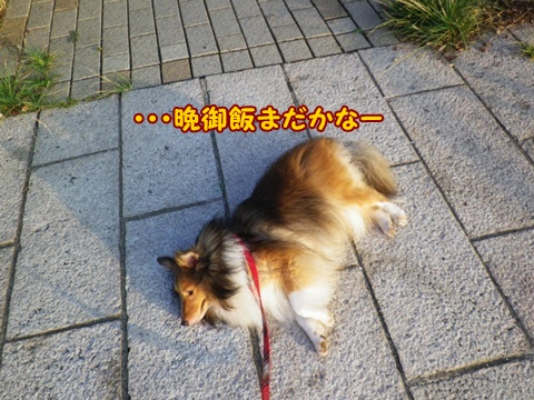 20120908_1_1.jpg