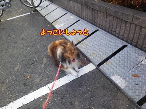 20120908_1_11.jpg