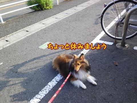 20120908_1_9.jpg