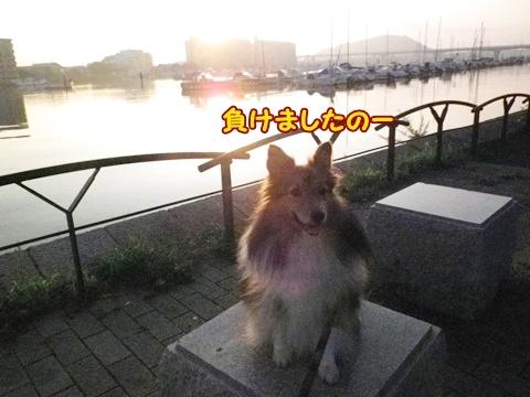20120908_4.jpg