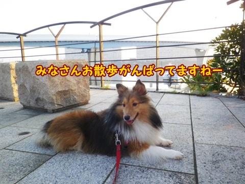 20120908_7.jpg