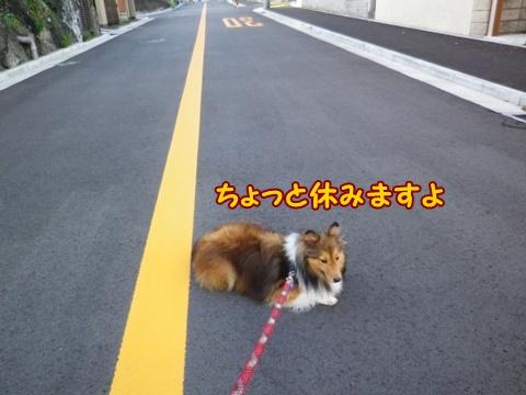 20120909_6.jpg