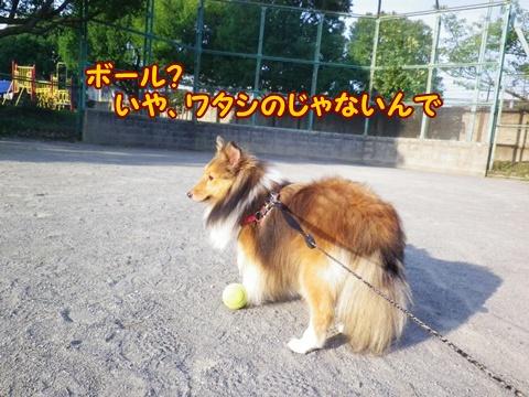 20120913_2.jpg