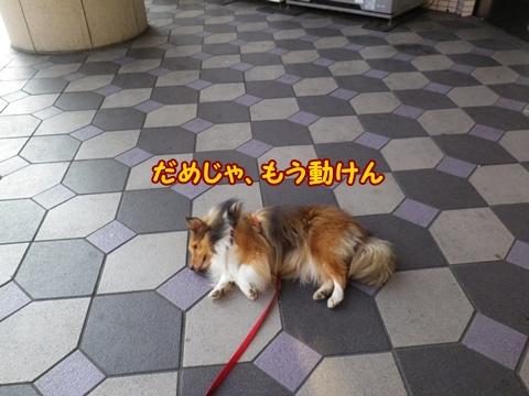 20120913_7.jpg