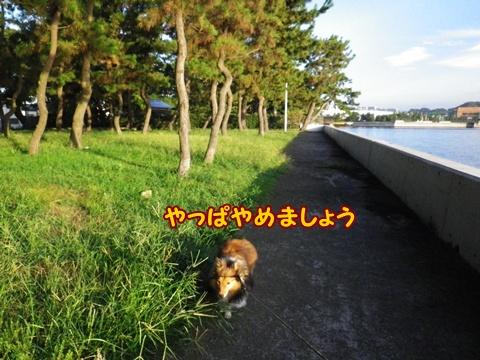 20120915_3.jpg