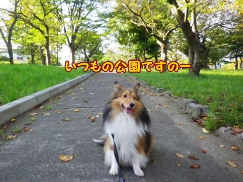 20120916_5.jpg